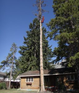 Hazardous Tree Removal Banff
